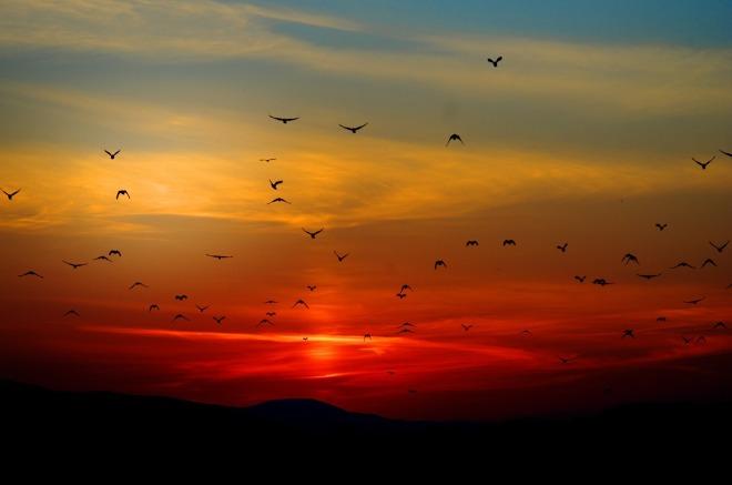 sunset-100367_1280
