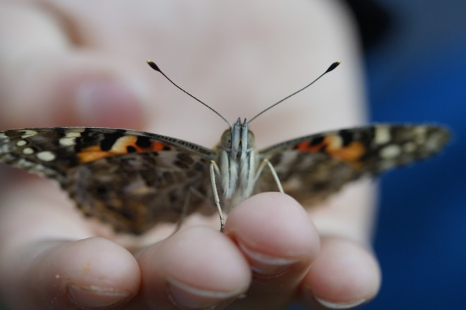 butterfly-757995_1280