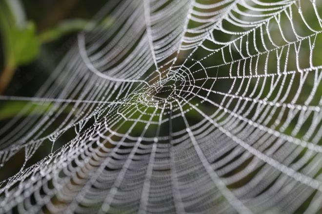 cobweb-449911_1280