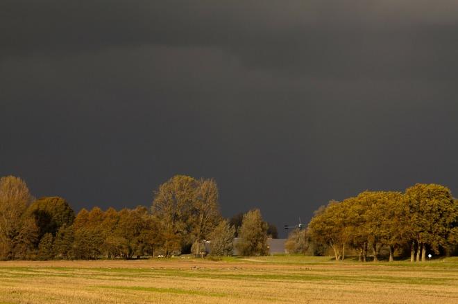 biesbosch-188180_1280