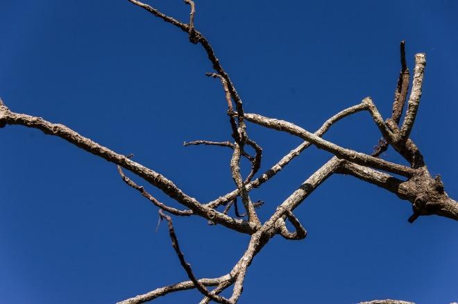 tree-645808_1280