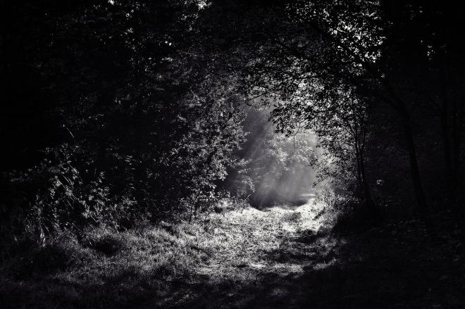 woods-690415_1280
