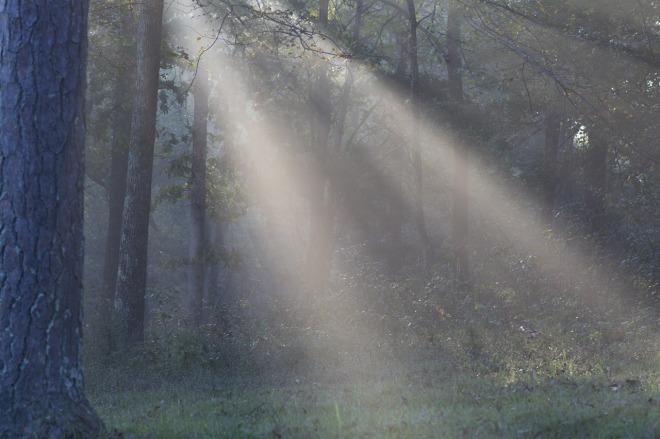sun-light-1093616_1280