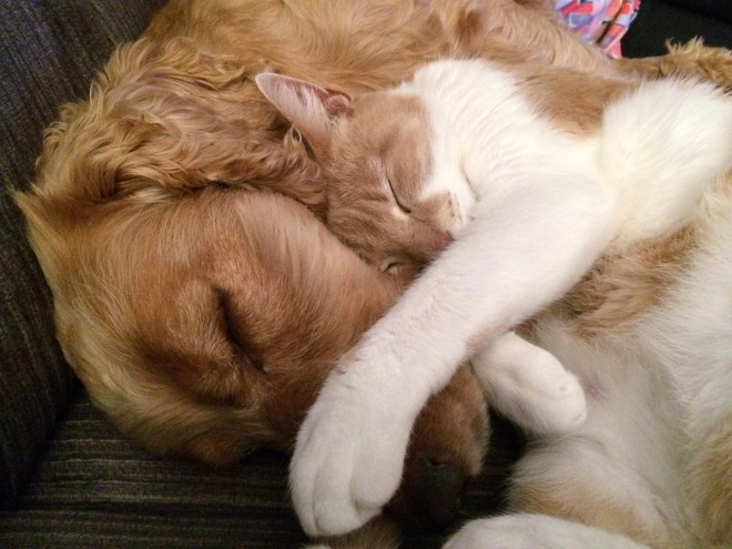 cat-and-dog-775116_1280
