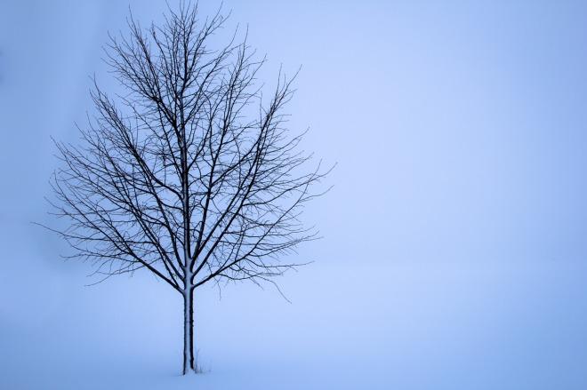 tree-1056598_1280