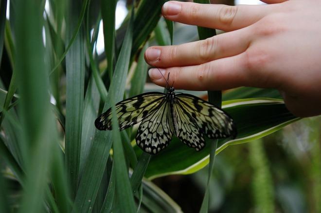 butterfly-22999_1280