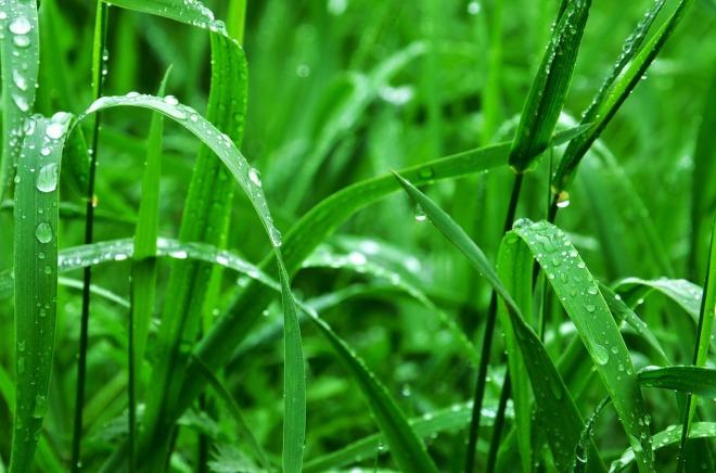 grass-932271_1280