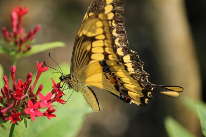 butterfly-1269298_1280