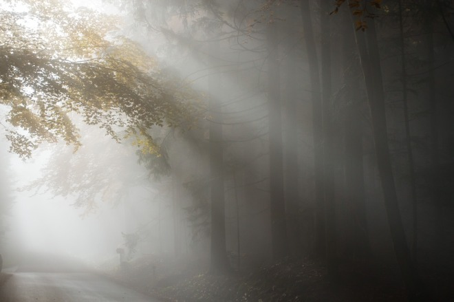 fog-1127618_1280