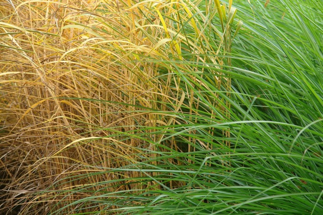 grass-538932_1280