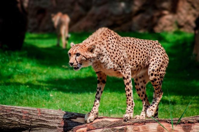 zoo-959633_1280