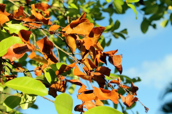 foliage-dries-621724_1280