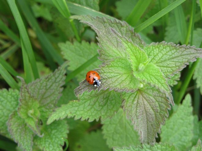 ladybug-1331183_1280