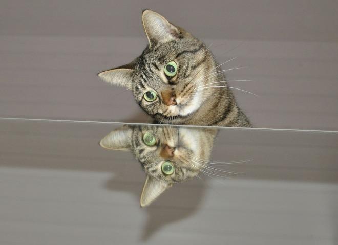 cat-597192_1280