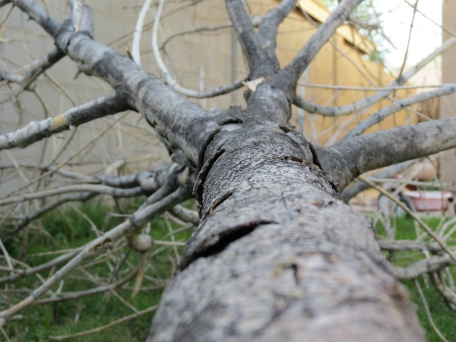 fallen-tree-908963_1280