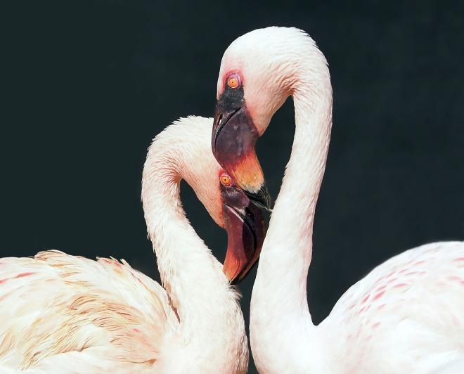 flamingo-1388341_1280