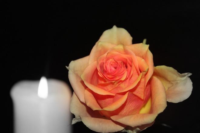 rose-1273733_1280
