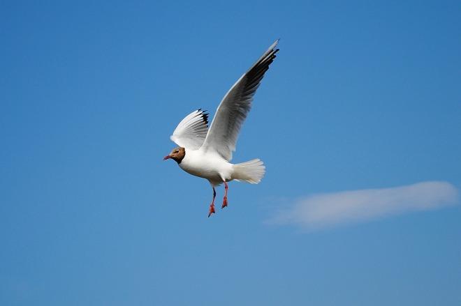 seagull-279645_1280