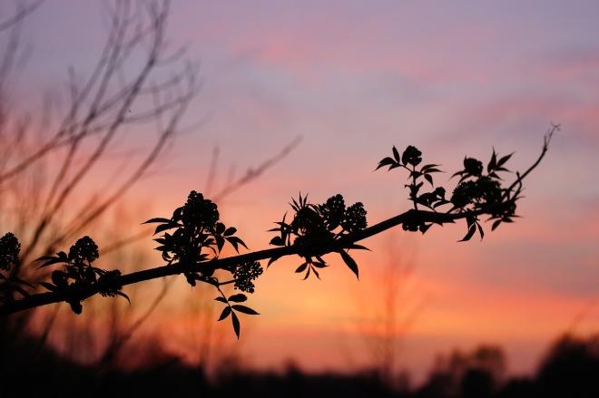 sunset-1327536_1280-2