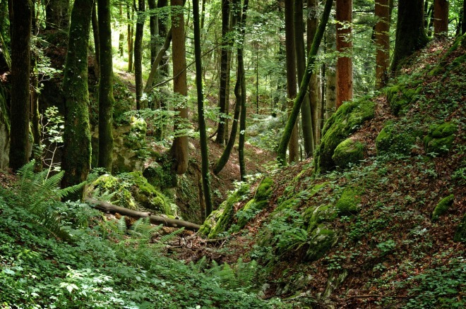 forest-1467138_1280