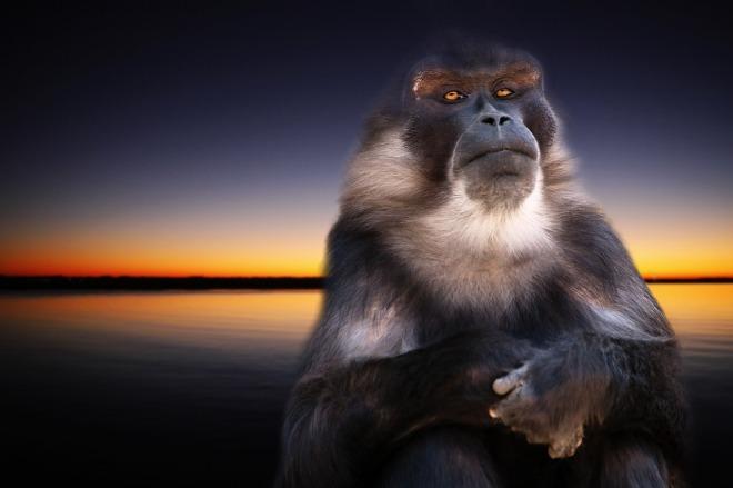 monkey-668335_1280