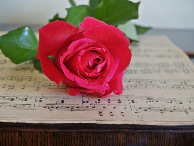 rose-1437023_1280