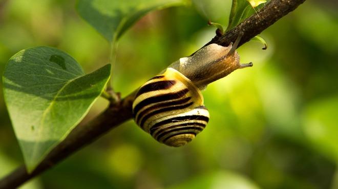 snail-1424539_1280