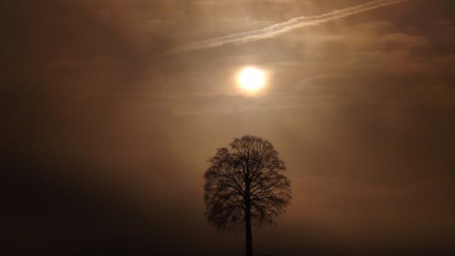 tree-1427204_1280