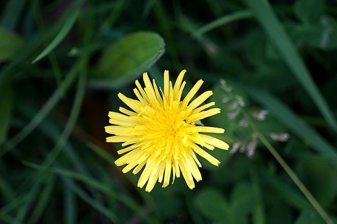 flower-1491170_1280