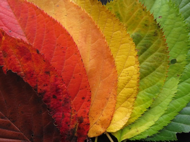 autumn-leaves-1486064_1280