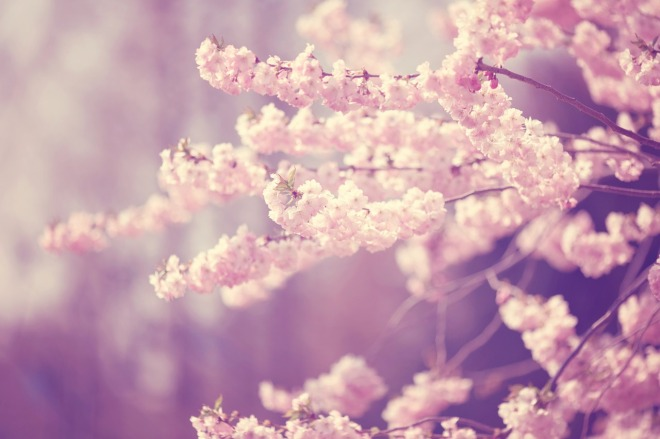 blossom-1184710_1280