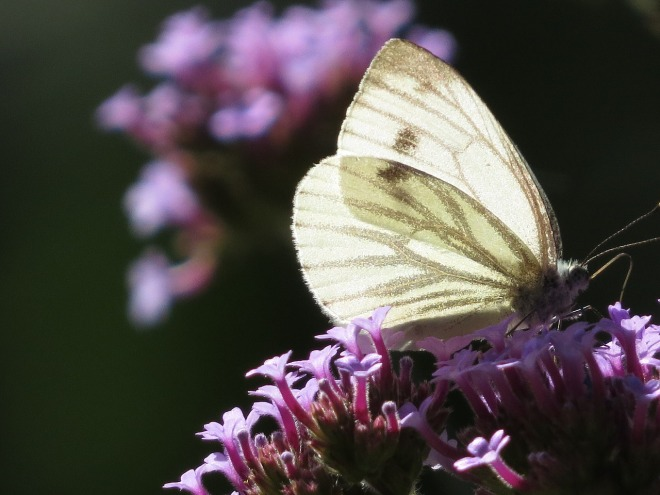 butterfly-1602754_1280