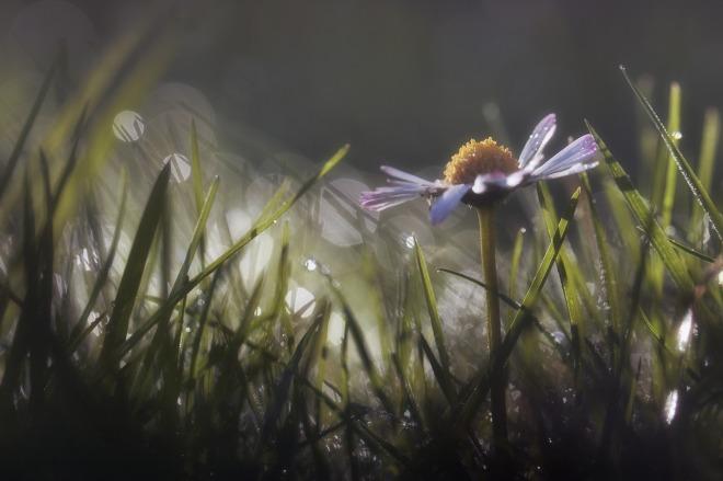 flower-1144088_1280