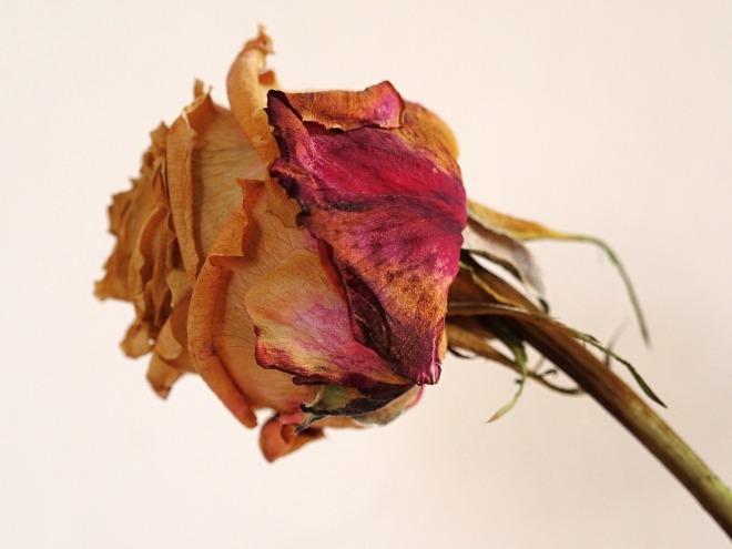 flower-1703332_1280