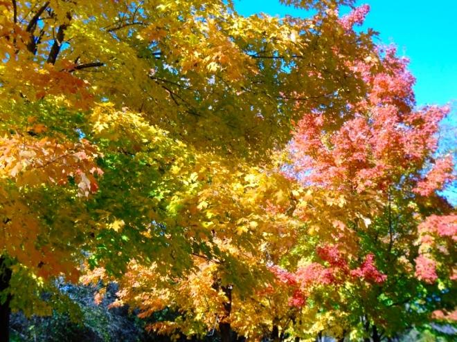 autumn-stuff2