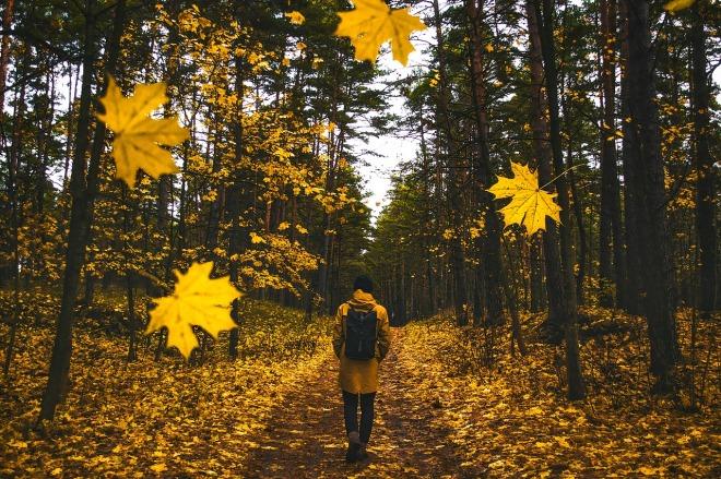 autumn-1804592_1280