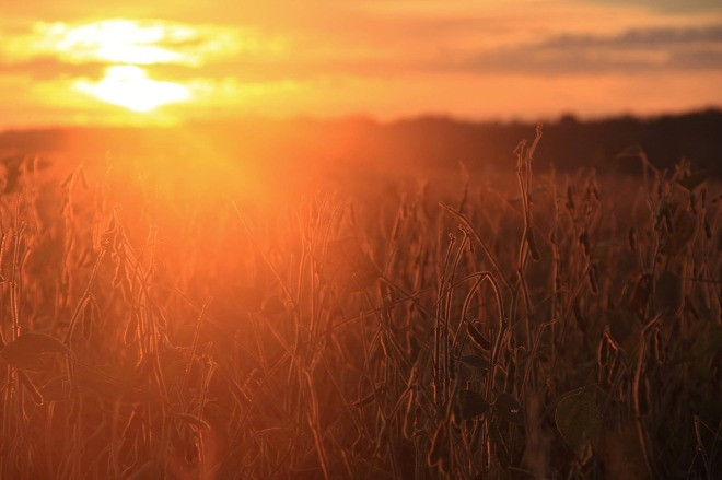 sunrise-1736612_1280
