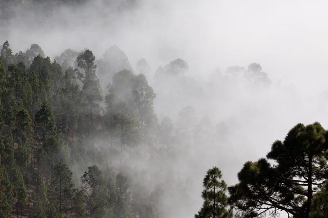 fog-571786_1280