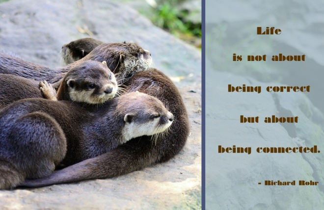 otters-2