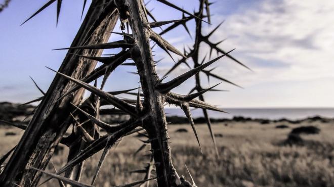 thorns-1327796_1280